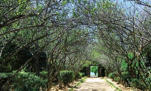 Nhà vườn An Hiên đón du khách trở lại với vẻ đẹp đậm đà văn hóa Huế