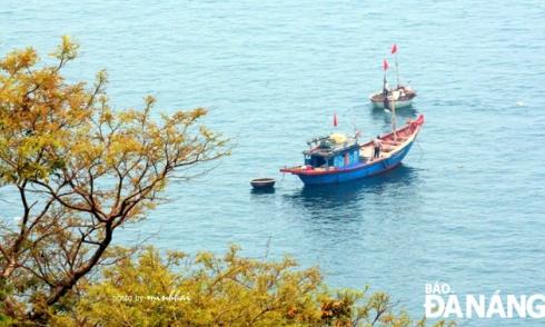 Điểm đến Sơn Trà: Lên bán đảo ngắm hoa